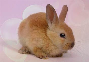 Cuentos Infantiles de Animales - El Conejito Enamorado